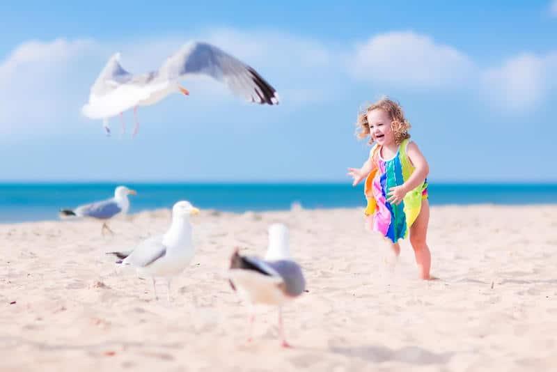 toddler chasing birds