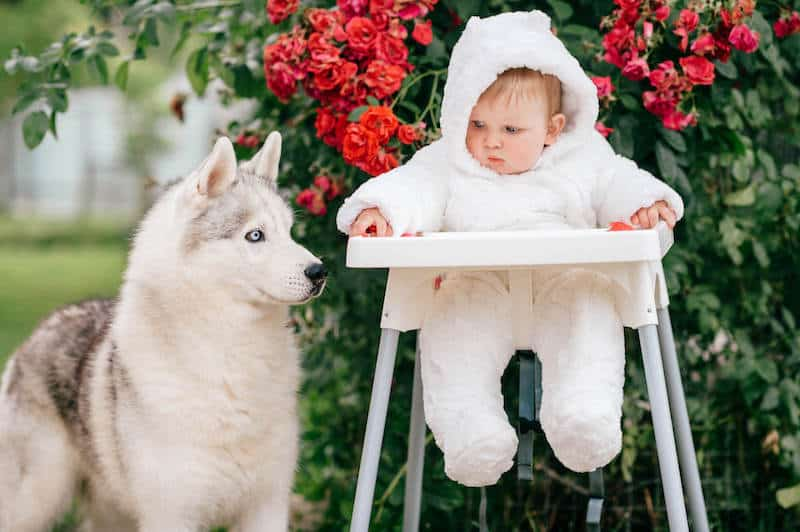hippie baby with animal
